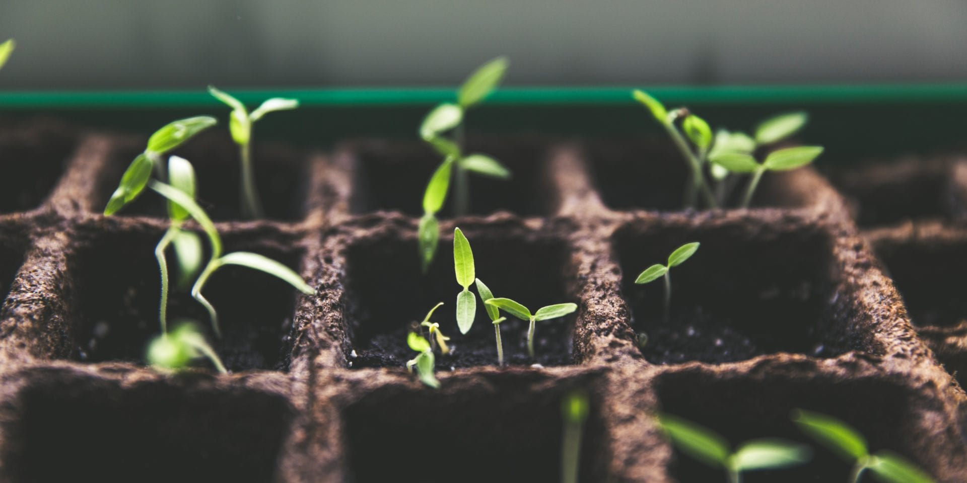 personal development plan - seedlings in a planting tray